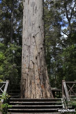 105-pn-warren-bicentennial-tree