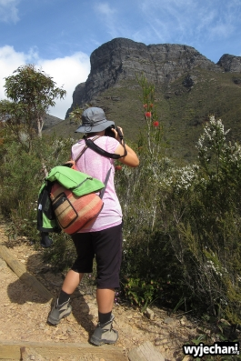 83-pn-strirling-range-bluff-knoll