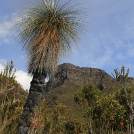 84-pn-strirling-range-bluff-knoll