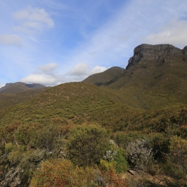 85-pn-strirling-range-bluff-knoll